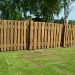 Robinie als Zaun